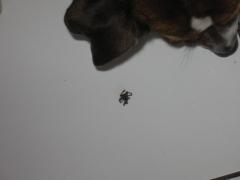 araignée 001.JPG