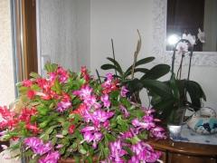 fleurs 002.JPG